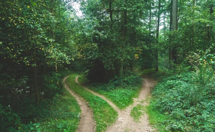 forest paths by Jens Lelie, Unsplash